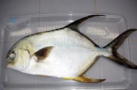 Batam Sukses Produksi Massal Benih Ikan Bawal Hibrida