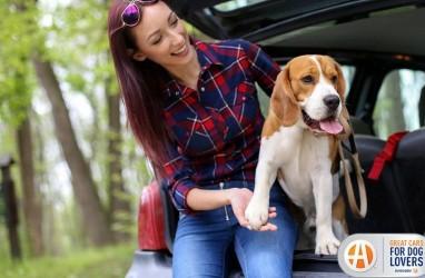 Enam Fitur Mobil Ramah Anjing