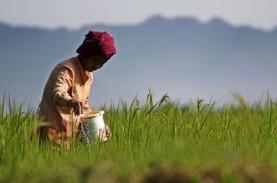 Kartu Tani untuk Pupuk Berlaku Efektif Hari Ini, Petani…