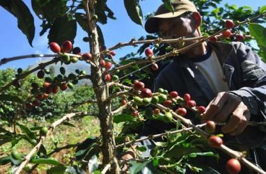 Nilai Ekspor Lampung Juli 2020 Meningkat Hingga 26 Persen
