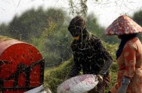 Agustus 2020, Nilai Tukar Petani di Lampung Naik 1,36…