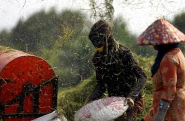 Agustus 2020, Nilai Tukar Petani di Lampung Naik 1,36 Persen