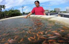 Stimulus Diklaim Dongkrak Daya Beli Pembudidaya Ikan