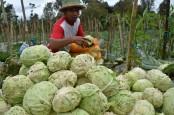 Harga Sayuran Anjlok, ASN Jateng Dikerahkan Beli Sayur Petani