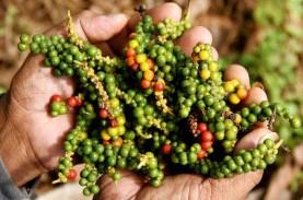 Harga Lada di Bangka Belitung Naik, Petani Sebut Belum…