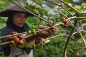 Indonesia Ingin Menjadi Produsen Kopi Nomor 2 Dunia Kembali
