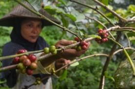 Indonesia Ingin Menjadi Produsen Kopi Nomor 2 Dunia…