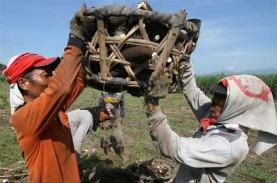 Riau Impor 40.000 Ton Ubi Kayu untuk Kebutuhan Industri