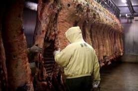 KOMODITAS DAGING SAPI : Ongkos Impor Membengkak 100%