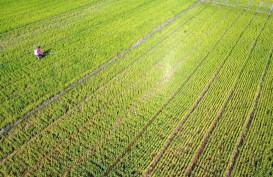 Pengeringan Jaringan Irigasi, Begini Proyeksi Produksi Padi di Cilacap