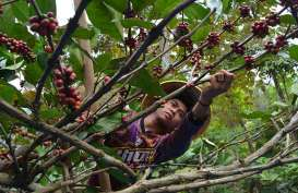 Hati-Hati! La Nina Ganggu Komoditas Pangan di Asia Tenggara hingga Amerika Latin
