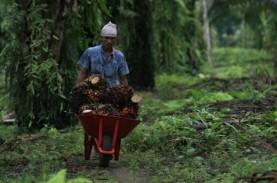 Pembukaan Lahan Disetop, Petani Sawit Sumbar Gigit…