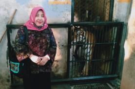 Apa Kabar Harimau Kurus di Lamongan? Ini Update dari…