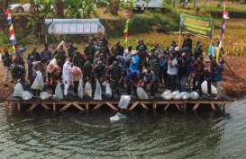 Budidaya Ikan Air Tawar, Purwakarta Manfaatkan Eks Galian C