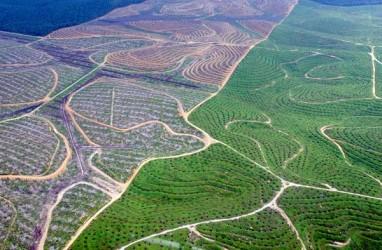 Peremajaan Sawit Petani di Riau Saat baru Terealisasi 42 Persen