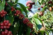 International Coffee Organization Capai Komunike Bersama Jaga Geliat Bisnis Kopi