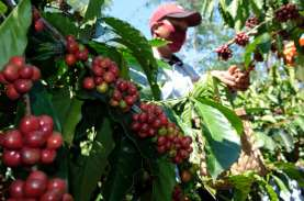 International Coffee Organization Capai Komunike Bersama…
