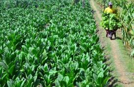 Teknik Pertanian Alami di Gorontalo Wujudkan Ekosistem Pertanian Berkelanjutan