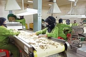 Jamu Indonesia Kalah di Pasar Global, Industri Diminta…