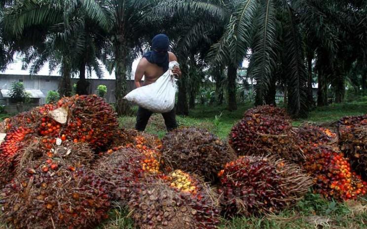 Pekerja menata kelapa sawit saat panen di kawasan Kemang, Kabupaten Bogor, Minggu (30/8/2020).. Bisnis - Arief Hermawan P
