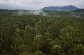 2 Dekade, 100 Juta Ha Hutan Lenyap, Cek Kondisi Sejumlah Negara