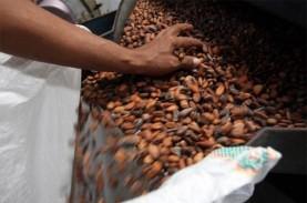 Ekspor Biji Kakao Manokwari Tak Terpengaruh Pandemi