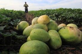 Hortikultura Dinilai Masih Berpeluang di Tengah Pandemi