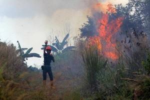 Kebakaran Hutan Dan lahan di Kalimantan Selatan Mulai Marak Terjadi