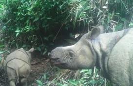 2 Badak Jawa Lahir di Taman Nasional Ujung Kulon