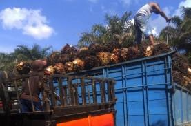 Pesisir Selatan Kekurangan Pabrik Pengolahan CPO