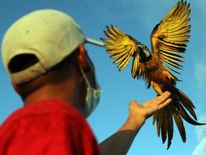 Burung Macaw Banyak Dipelihara Masyarakat Karena Bisa Dilatih