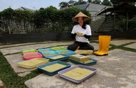 Potret Rennita Yang Merubah Hobi Tanaman Hidroponik Menjadi Sumber Penghasilan