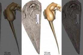 Fosil Dinosaurus Berusia 125 Juta Tahun Ditemukan…