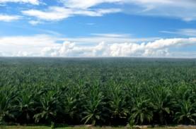 Harga CPO Menguat, Sampoerna Agro (SGRO) Siap Pacu…
