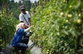 TaniHub Gandeng Garudafood Berdayakan Petani Kacang…