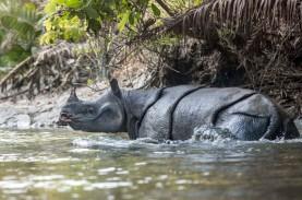 JRE Luncurkan Buku Fotografi Ekspedisi Badak Jawa