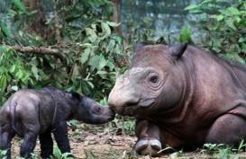Mantap! Aceh Timur Sediakan Lahan Suaka Badak Sumatra