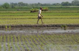 Semarang Klaim Mempertahankan 2.500 Hektare Lahan Pertanian