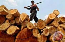 Hutan Jatim Diproyeksi Bisa Produksi Kayu 526.474 m3 Tahun Ini