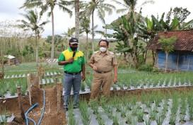 Blitar Selatan Mengembangkan Pertanian Hortikultura