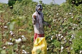 Cotton Council International Dukung Bisnis Garmen…