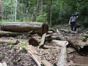 Tidak Ada Tindakan Tegas Pemerintah, Hutan Pegunungan Seulawah Terancam Gundul