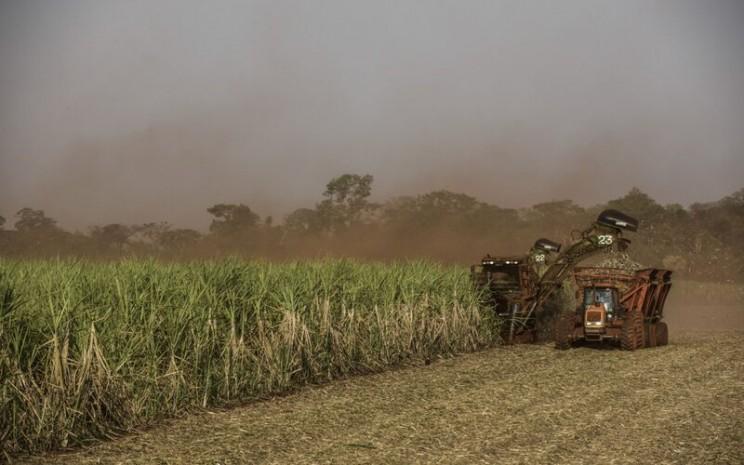 Petani sedang memanen tanaman tebu di Brazil - Bloomberg