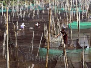 Kementerian Kelautan dan Perikanan Manargetkan Bantuan Benih Ikan Air Tawar Sebanyak 48,96 Juta Ekor Pada 2020