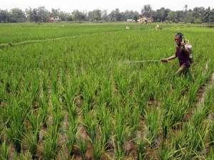 Kementerian Pertanian Himbau Pentani Untuk Manfaatkan Asuransi Usaha Tani Padi