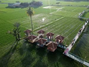 Wisata Sawah di Gorontalo Menjadi Tambahan Ekonomi Penduduk Setempat