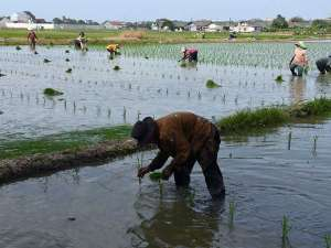 Lahan Pertanian di Ibu Kota Terus Menyusut Akibat Pembangunan Yang Masif