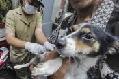 Hari Rabies, Menkes Terawan Sebut Gigitan Anjing Lebih Mematikan