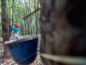 Kementerian PUPR Tambah Anggaran Pembelian Karet Alam Petani Menjasi Rp120 Miliar