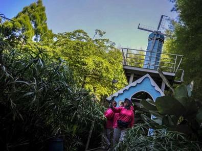 Wisata Kampoeng Tulip di Bandung Menyuguhkan Suasana Khas Belanda
